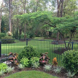 A bit our our garden; set amongst the gum trees